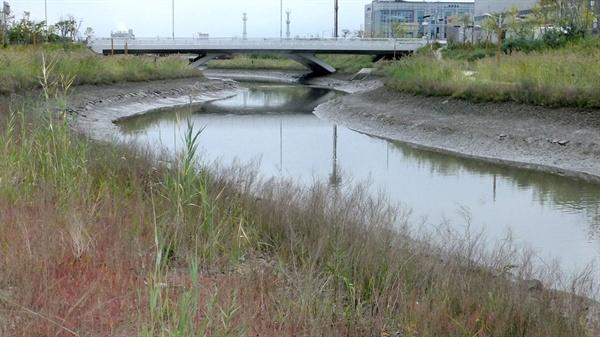과거 갯벌의 모습이 남아있는 하천 하류 모습.