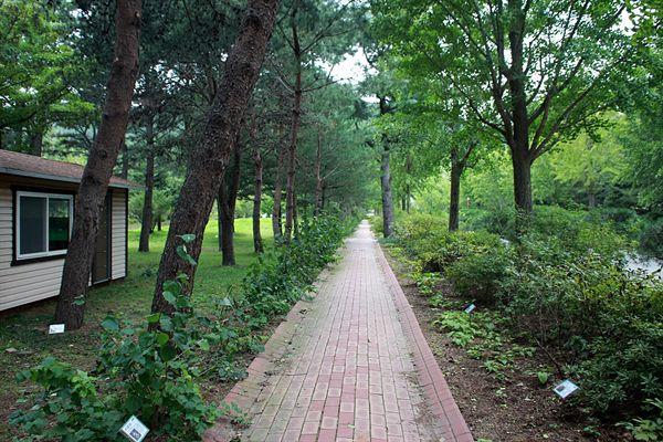 경주 산림환경연구원 건물이 있는 내부 숲길 모습