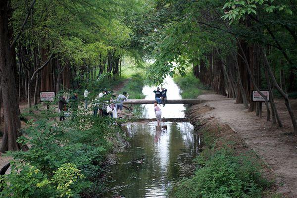 경주 산림환경연구원 습지생태관찰원 수로, 통나무다리 모습. 사진 포인트로 유명한 곳