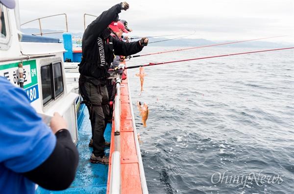 몇 주 전, 동해로 황열기(표준명 노란볼락) 낚시를 다녀왔다. 황열기는 볼락과의 생선으로 우리가 익히 알고 있는 우럭과 사촌지간이다.