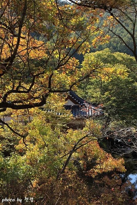 초간정 초간정은 오랜 고목과 울창한 숲에 둘러싸여 있다.
