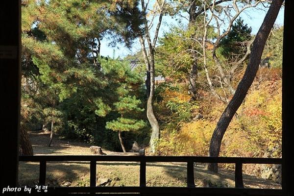 초간정 풍경 기둥과 난간이 액자틀이 되어 그 사이로 보는 풍경(View)이 압권이다.