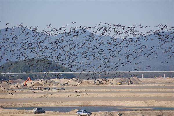 4대강사업 당시 수백대의 포크레인과 덤프트럭을 동원 해평습지를 도륙했다. 철새들이 오건말건 상관없이 강행했다. 이런 짓을 강행한 것이 국토부다.