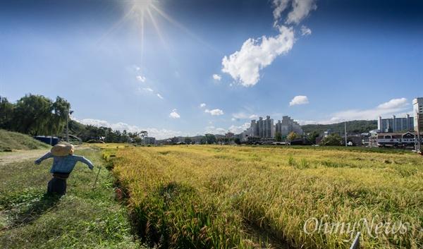 가을 날, 우보농장의 전경은 황금들녘 대신 검, 적, 노, 청, 녹의 풍경이 펼쳐진다.