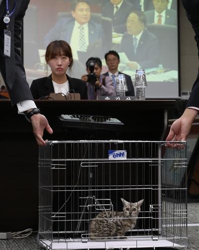 국감장에 온 고양이 '어리둥절'