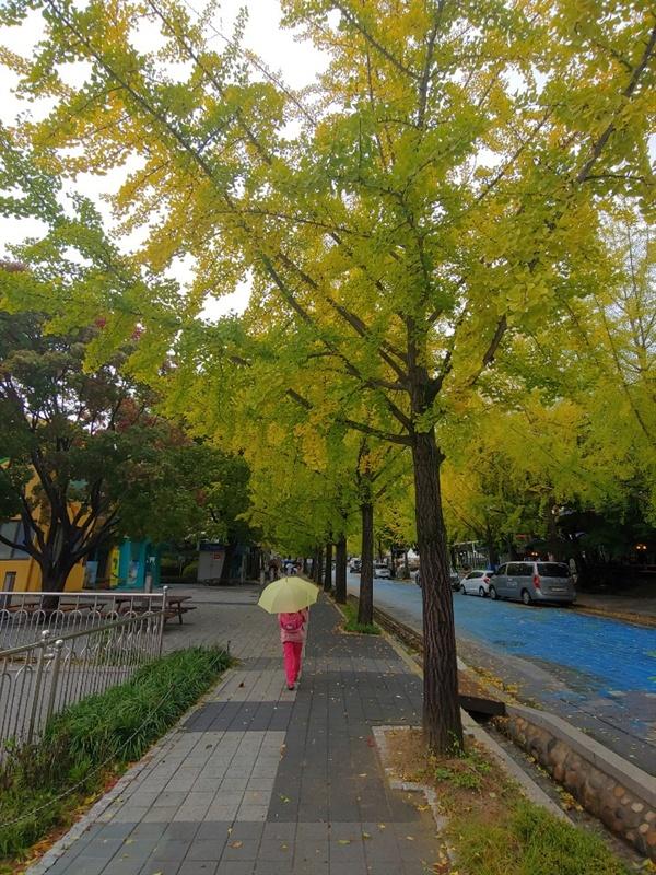 용문사가는길 낙엽 태풍 콩레이가 지나가고 낙엽이 떨어져 있어요.