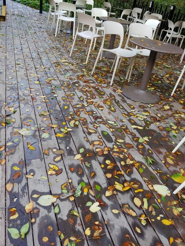 예술작품이 된 용문사의 낙엽 용문사 입구 카페 낙엽