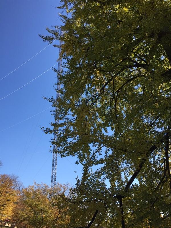 용문사 피뢰침 은행나무를 지켜주는 피뢰침
