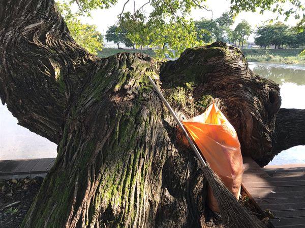 이 오래된 왕버들나무에 걸린 주머니의 정체가 뭘까요?