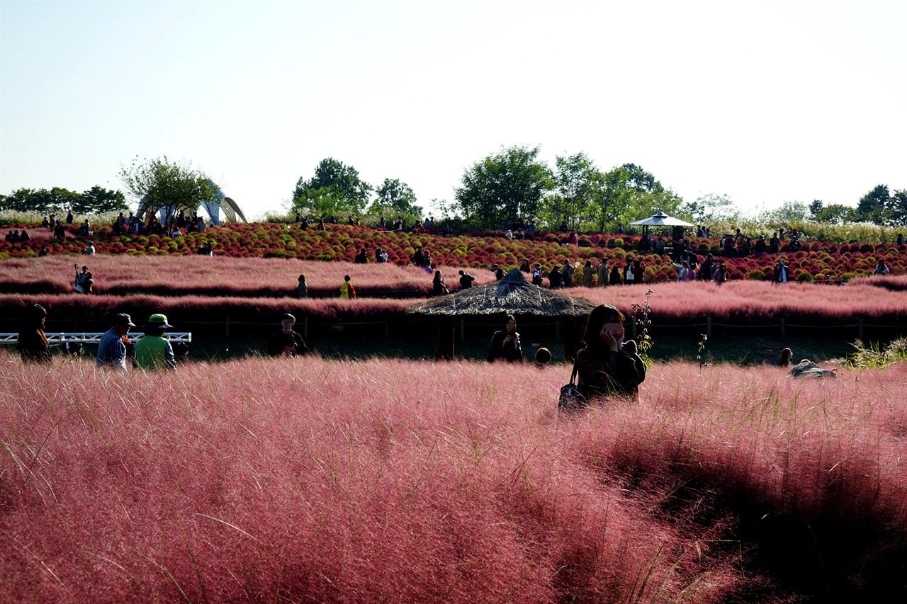 핑크뮬리의 아름다운 풍경