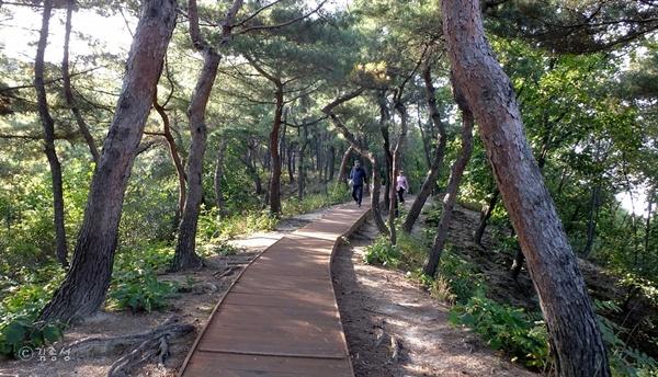 의릉 둘레길에서 이어지는 천장산 숲길.