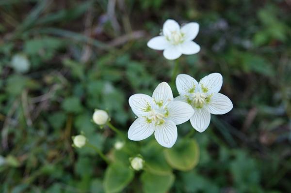 물매화 물매화 꽃도 만날 수 있다.