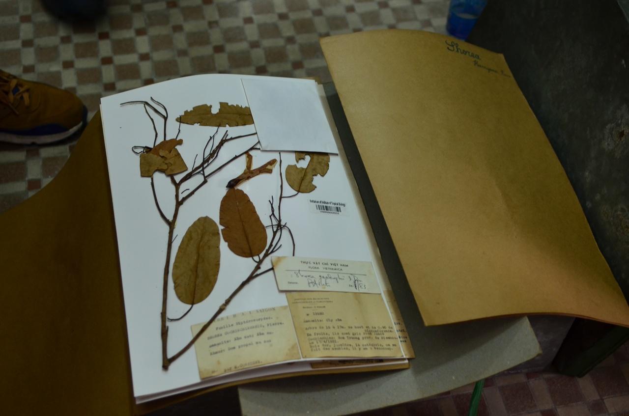 베트남 열대생물연구소 수장고에서 본 100년 가까이 된 식물표본.