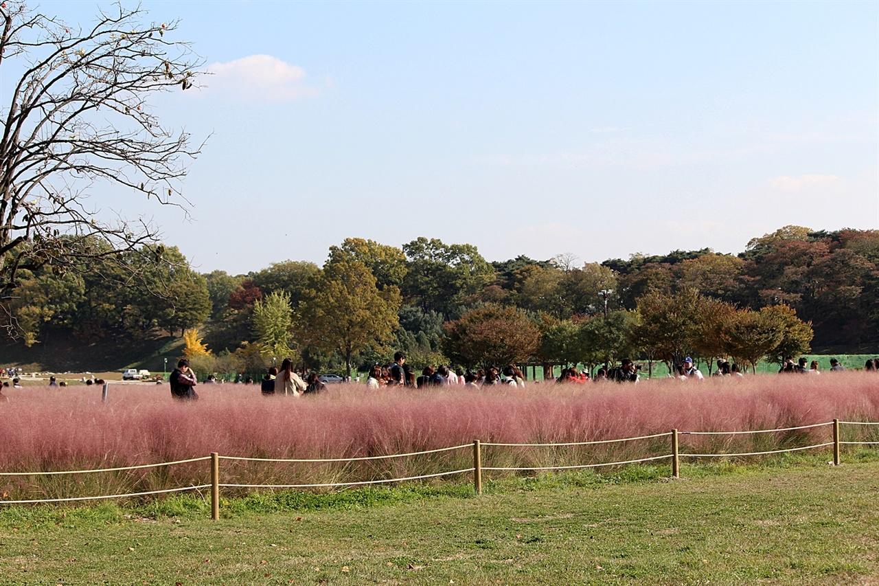 평일 사람들로  붐비는 경주 첨성대 핑크뮬리단지 모습