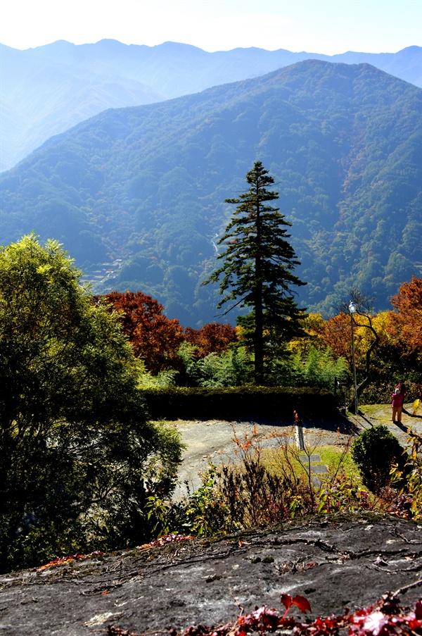 지리산을 떠받치듯 우뚝 서 있는 금대암 전나무