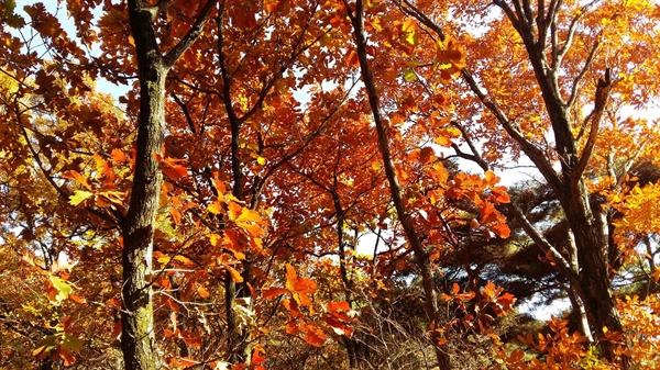 봄날의 숲이 연초록의 수채화라면 가을의 숲은 다채롭게 각자의 색깔이 드러나는 유화에 가깝다.