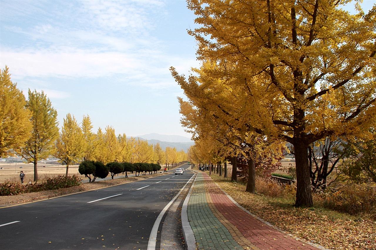 노랑 은행잎이 장관을 이루는 통일전 앞 은행나무 길