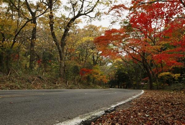 대흥사 매표소에서 절집으로 가는 도로. 풍경이 늦가을의 서정을 선사해 준다.