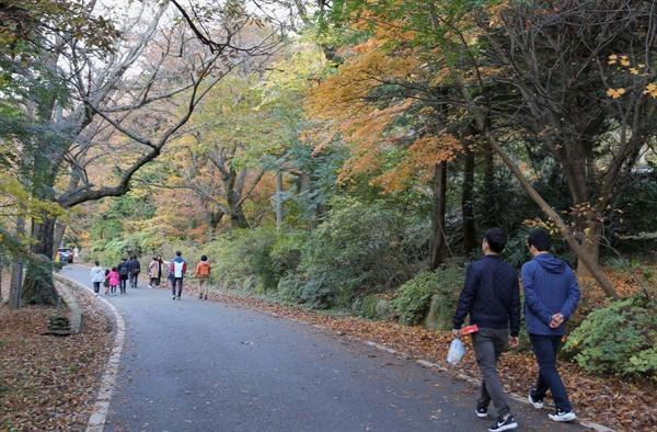 늦가을 대흥사 숲길. 만추를 즐기려는 여행객들이 숲길을 거닐고 있다.