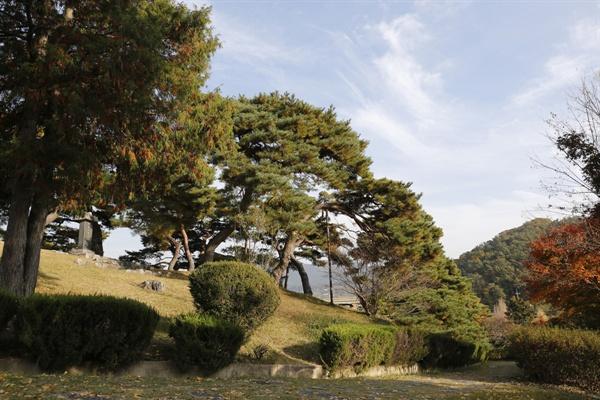 포충사 옛 사당 앞 소나무 숲. 포충사는 임진왜란 때 의병장 고경명과 유팽로 등을 기리고 있다.