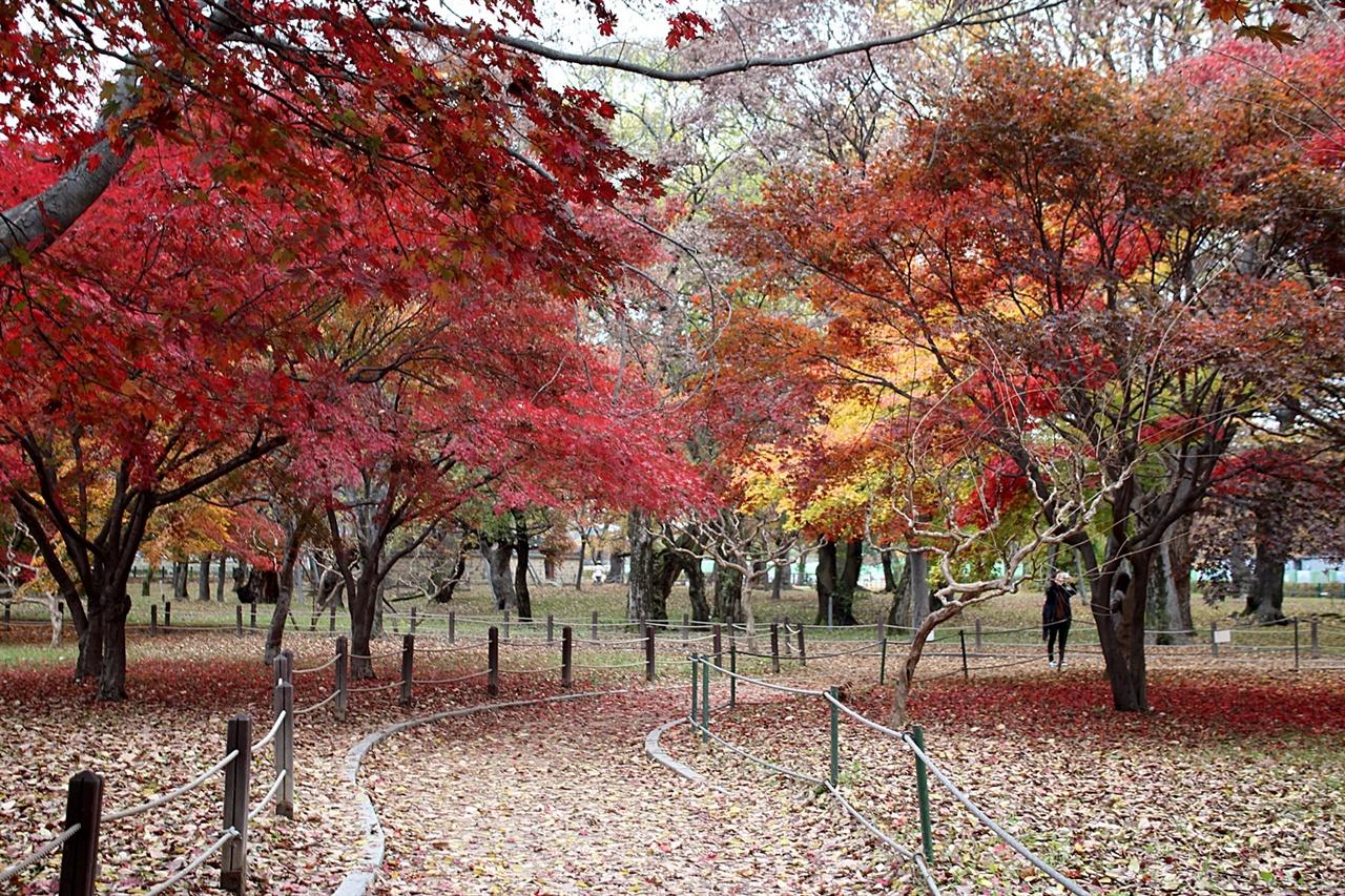 경주 계림 가을 단풍 모습