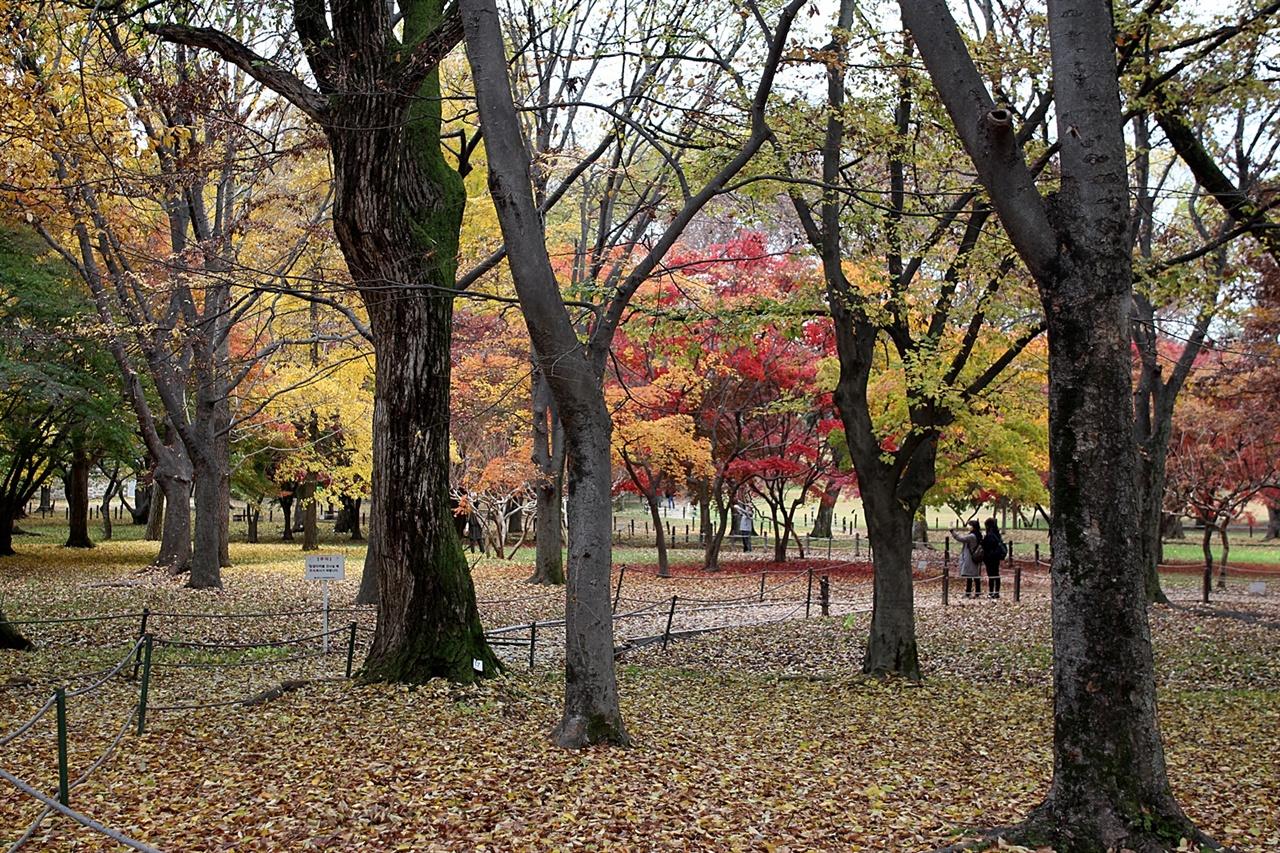 경주 계림 가을 단풍,  보기만 해도 힐링이 될 것 같은 모습