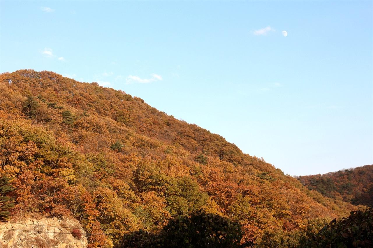 햇빛에 반사된 경주 추령재 가을 단풍 모습
