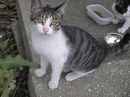 """우리 사회에서 길고양이는 잔혹한 폭력에 희생되기도 한다. 박선미 한국고양이보호협회 대표는 """"작은 생명체를 보듬어 주고 함께 하는 것이 인간이 할 수 있는 최고의 선의""""라고 말했다."""