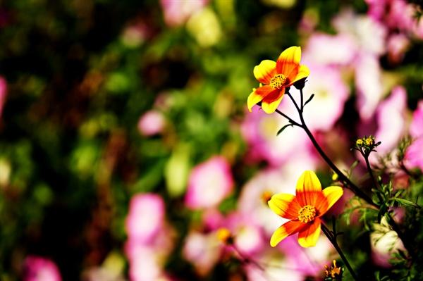 공원 화분의 꽃