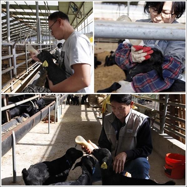 소망농장  하루 네 번씩 새끼염소에게 우유 먹이는 세 가족