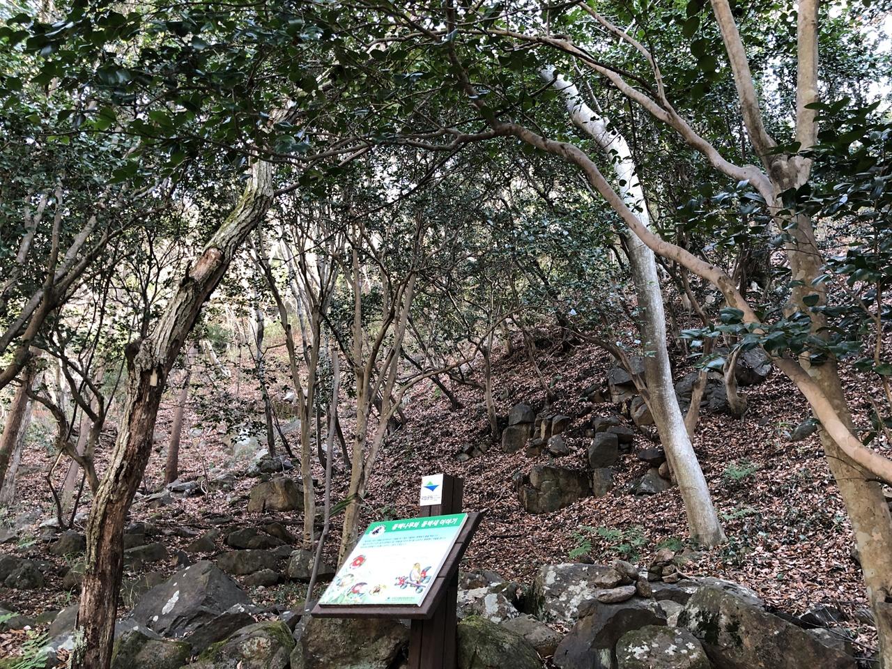 화엄숲길 동백나무 군락
