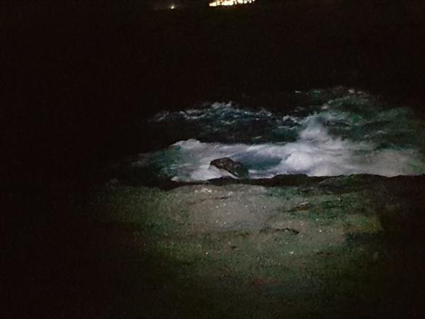 다금바리를 낚아 올린 갯가 바다에서 조금 들어온 포인트로 수심은 깊은 편이다. 다금바리와 참돔을 잡은 곳이다