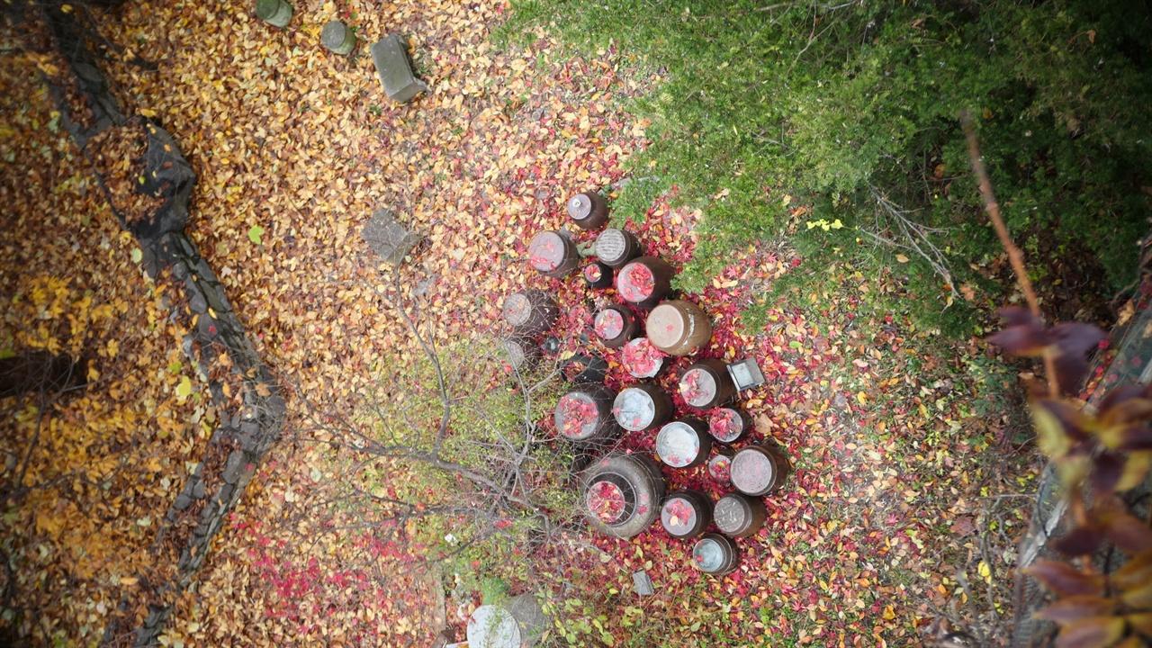 나무는 계절마다 별세계를 만들어 줍니다.