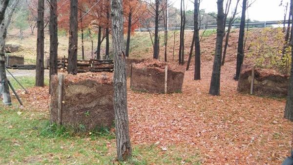 낙엽은 땅으로 온전히 되돌아가야할 영양자원입니다.