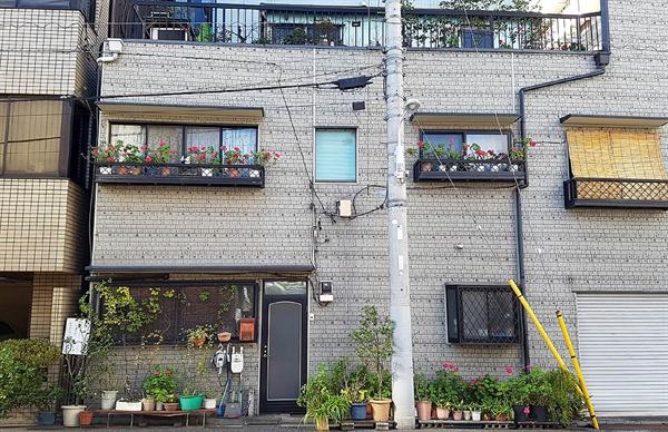 일본의 가정집 문 앞과 베란다에 같은 종류의 꽃들이 장식돼 있다.