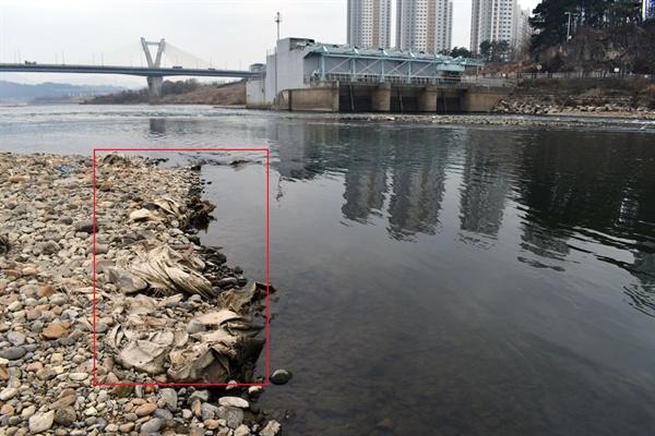 세종보 수력발전소 앞에도 너덜너덜해진 마대자루가 드러나고 있다.