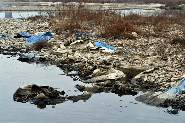 땅속에 묻혔다가 강물에 씻기면서 물밖에 드러난 마대자루들이 널브러져 있다.