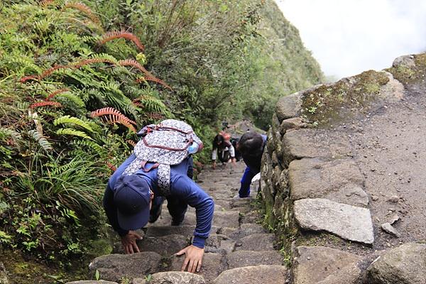 마추픽추를 거쳐 와이나픽추로  올라가는 길은 거의 기어올라가다 싶이 가파랐다.