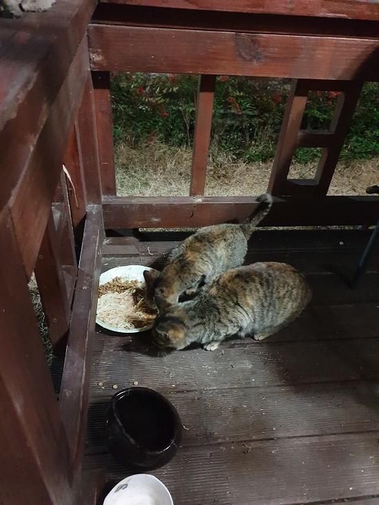 길고양이 줄리엣과 줄리 모녀. 이들은 길고양이 반전과 신예가 없는 틈을 타서 잠시 남은 사료를 먹곤 한다.
