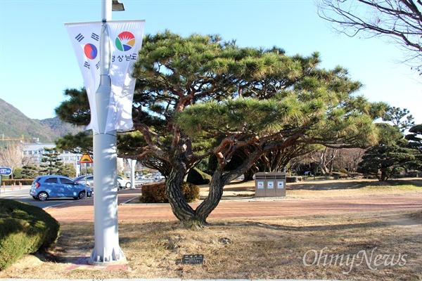2010년 7월 1일 경남도청 뜰에 심어진 김두관 전 경남지사의 기념식수 나무 옆에 태영열 전지판 가로등이 세워져 있다.