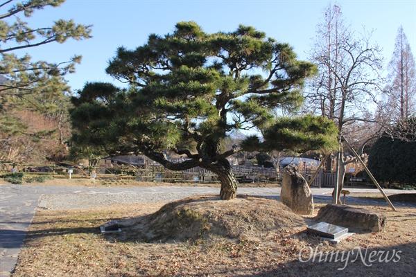 경남도청 뜰에 홍준표 전 경남지사가 기념식수한 소나무가 자라고 있다. 그런데 표지판이 2개다. 왼쪽은 2012년 12월 20일 취임기념, 오른쪽은 2016년 6월 1일 채무제로 기념식수 표지판이다.