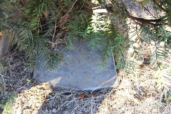경남도청 어린이집 뜰에 있는 나무다. 김태호 전 경남지사가 2008년 2월 20일 개원 때 했던 기념식수로, 지금은 표지석이 나무 밑에 숨어져 있어 보이지 않는다.