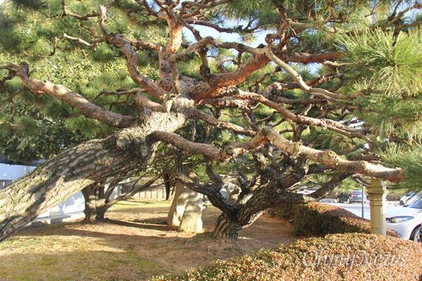 경남도청 중앙현관의 오른쪽과 왼쪽 화단에는 도청 이전 당시 고 이병철 삼성그룹 회장이 기증한 소나무 8그루가 자라고 있다.