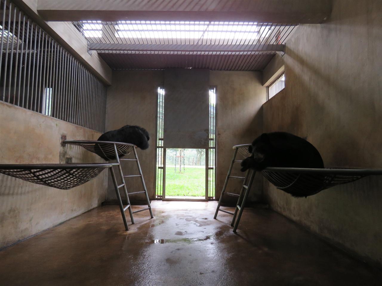 방에서 휴식을 취하는 곰들. 방사장과 방을 자유로이 오갈 수 있다.