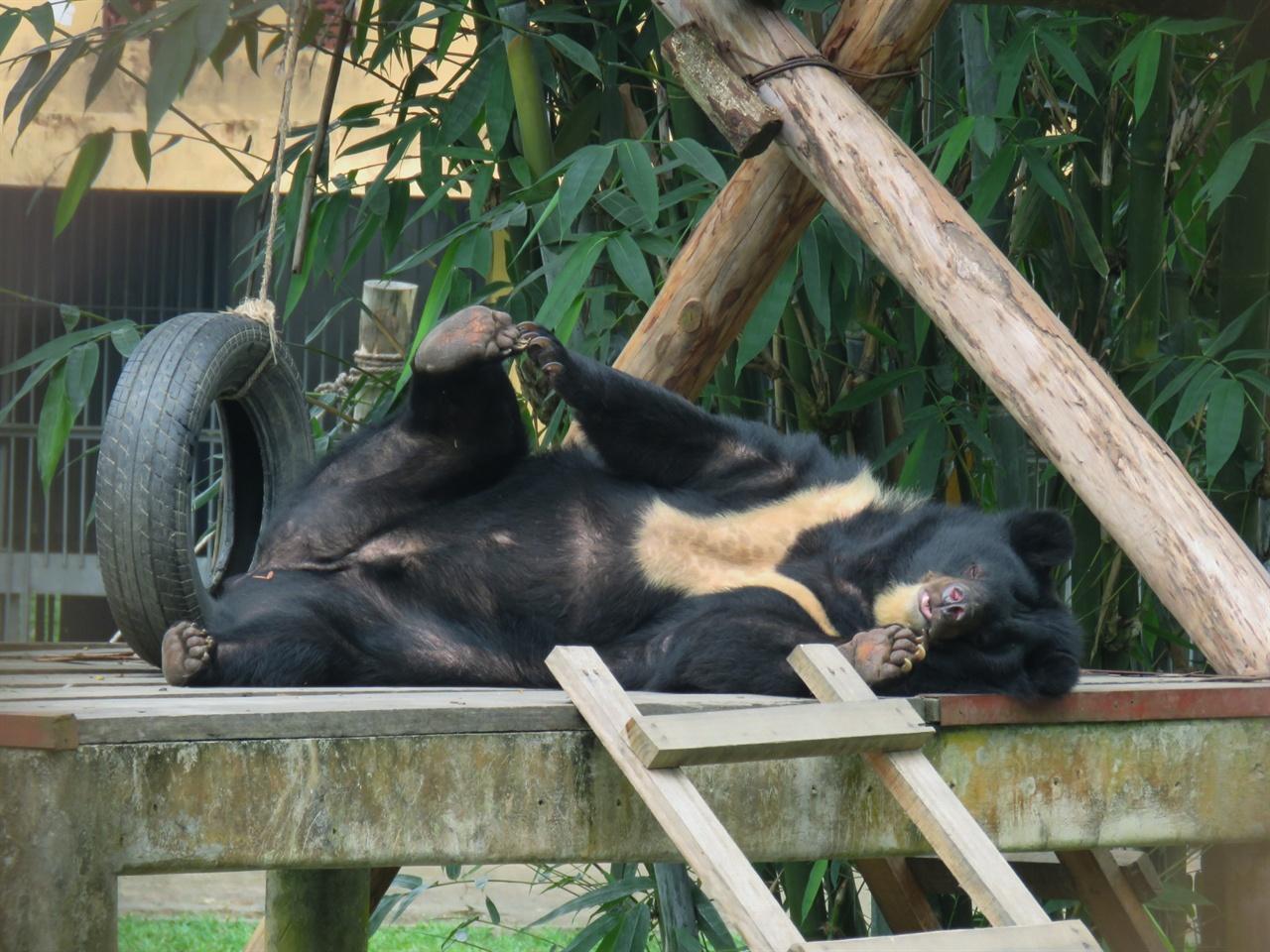 한가로이 낮잠을 즐기는 곰의 모습. 무슨 꿈을 꾸고 있을까.