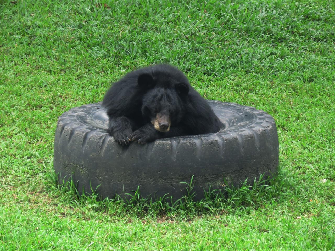 편안해 보이는 곰의 모습. 앞으로도 평안하길.