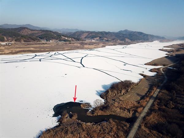 충남 공주시 탄천면에서 흘러드는 작은 수로 덕분에 얼어붙지 않은 곳에 큰고니와 오리들이 몰려있다.