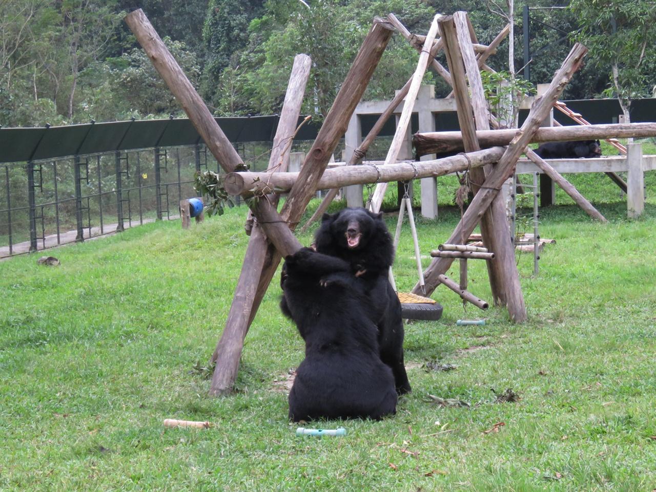 합사 훈련을 마친 곰들은 서로에게 적절한 자극이 될 수 있다.