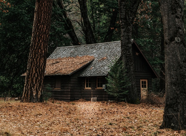 6년간 살았던 동백숲 작은 집은 모두의 숲으로 열어놓고 나왔다.