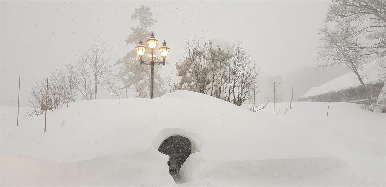 핫코다 호텔 정문 이글루 핫코다 산은 겨울 스포츠로 유명하며 스키 시즌은 12월부터 5월까지이다